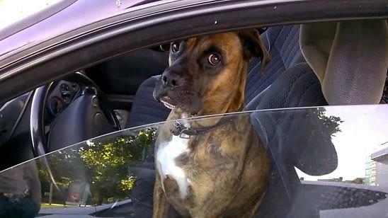 Название: dog.jpg Просмотров: 170  Размер: 40.4 Кб