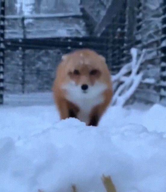 Название: fox.jpg Просмотров: 364  Размер: 39.3 Кб