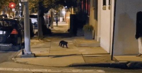 Название: blackcat.jpg Просмотров: 444  Размер: 23.4 Кб
