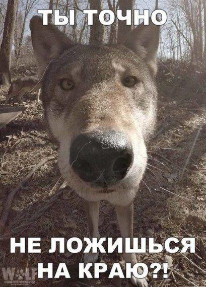 Название: volchok.jpg Просмотров: 385  Размер: 61.6 Кб