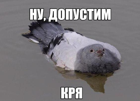 Название: krya.jpg Просмотров: 186  Размер: 23.8 Кб