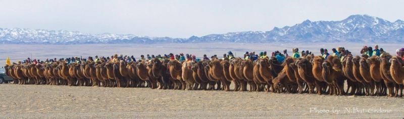 Название: верблюды.jpg Просмотров: 565  Размер: 92.5 Кб