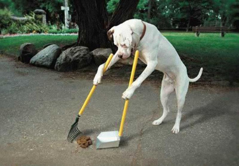 Название: собака.jpg Просмотров: 117  Размер: 240.9 Кб