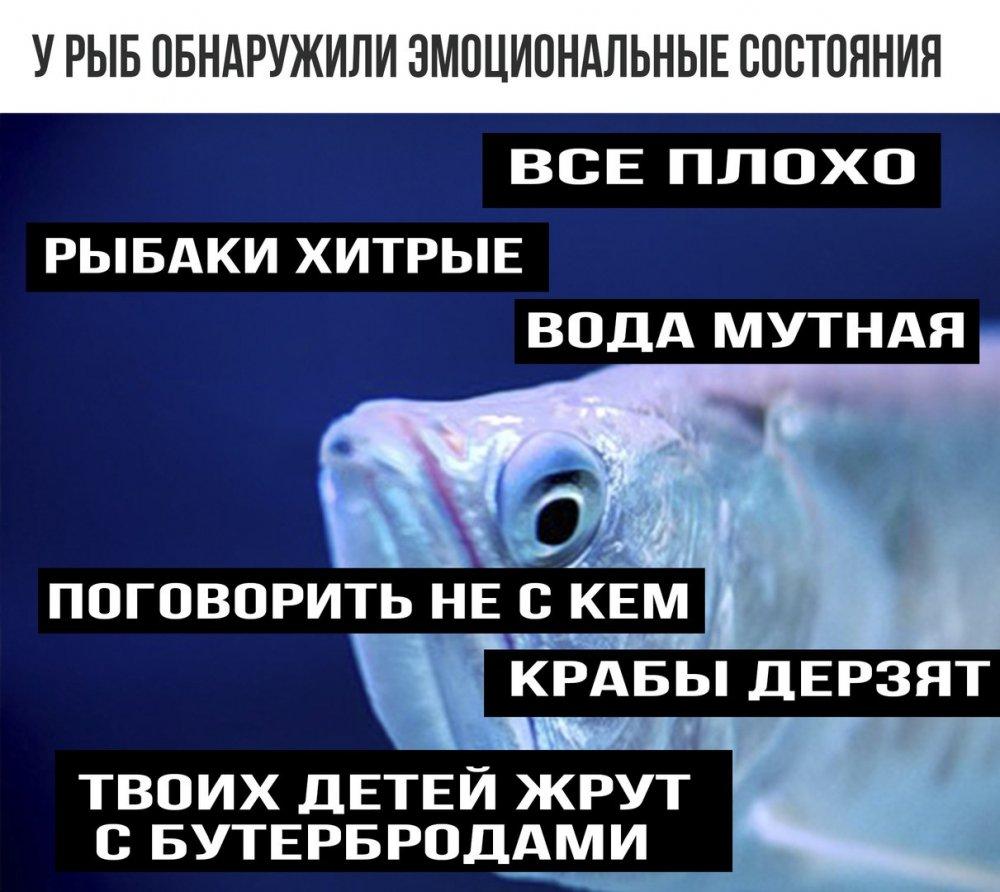 Название: fish.jpg Просмотров: 280  Размер: 123.5 Кб