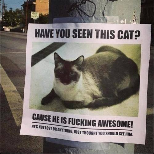Название: 1502655-cat-500-a542d8629a-1484576644.jpg Просмотров: 308  Размер: 85.8 Кб